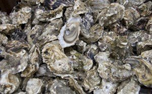Large fresh seafood oysters